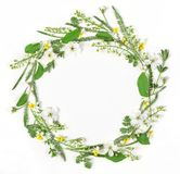 Round frame wreath made of spring flowers and leaves isolated on white background. Flat lay. Top view Stock Images