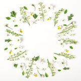 Round frame wreath made of spring flowers and leaves isolated on white background. Flat lay. Top view Royalty Free Stock Photos