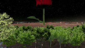 Round frozen land and red rose and trees at night stock footage