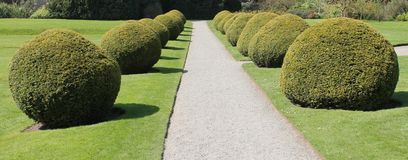 Round Garden Hedges. Royalty Free Stock Photos