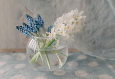 Round glass vase with hyacinth Royalty Free Stock Photography