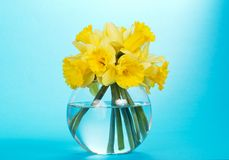 Round, glass vase with yellow narcissuses Stock Photo