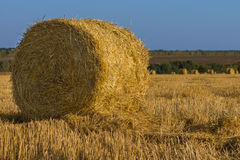 Round golden hay bale in a field Royalty Free Stock Photography