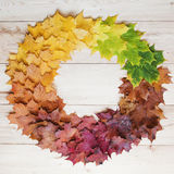Round gradient of fall maple leaves. Autumn round frame Stock Photos