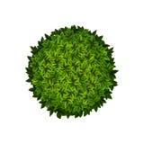 Round green bush Stock Photography