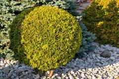 Round green bush Stock Photos