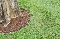 Round of green grass and the strong base of the tree. Round of green grass and the strong base of the tree, Roots buried deep in the soil Royalty Free Stock Photos