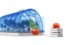 Round greenhouse with tomatoes Stock Photos