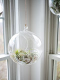 Round Hanging Terrarium Royalty Free Stock Photography