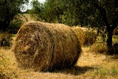 Free Round Hay Bails Royalty Free Stock Photography - 1298517