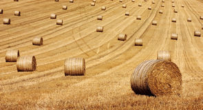 Round Hay Bails. Golden round hay bails await collection Royalty Free Stock Photos