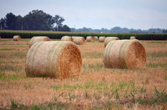 Round Hay Bails in Field Stock Photo