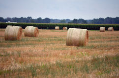 Round Hay Bails in Field Stock Photos