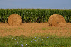 Round Hay Bails in Field Stock Image