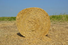 Round Hay Bails. Golden round hay bails from Italy stock image