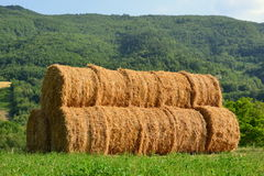 Round Hay Bails Stock Photos