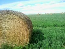 Round Hay Bale Royalty Free Stock Photography