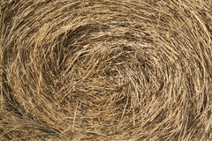 Round hay bale closeup Stock Image