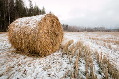 Round hay bale covered by snow left on a field in late autumn Royalty Free Stock Photo