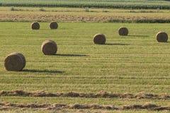 Round hay bale Stock Image