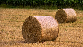 Round hay bale. At the evening Stock Photos