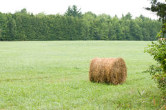 Round hay bale in field Stock Image
