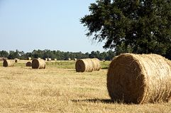 Round Hay Bale in Field. A round bale of hay in the field close with hay bales in the background in the horizontal or landscape view Royalty Free Stock Images