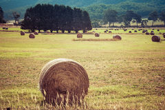 Round hay bale in a field closeup Stock Photography