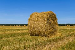 Hay bales. Round hay bale on the field after haymaking royalty free stock images