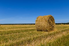 Hay bales. Round hay bale on the field after haymaking stock images