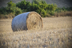 Round hay bale in Sardinia Stock Images