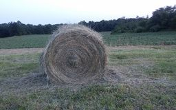 Round hay bale royalty free stock photos
