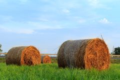Round hay bale in sunlit grassy pasture at sunset. royalty free stock photos