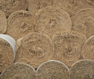 Round hay bales. Some round hay bales stacked one on another Royalty Free Stock Images