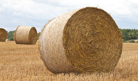 Round hay bales. Freshly made round hay bales in a field Stock Photos
