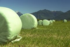 Round Hay Bales. Plastic wrapped round hay bales Stock Images