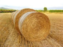 Round hay bales Stock Photography