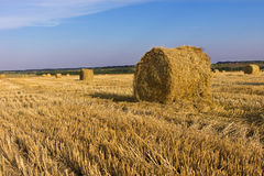 Round hay bales in an agricultural field Stock Photo