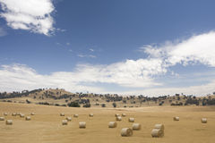 Round hay bales in Australian farm landscape. Landscape of hay bales of dry grass with golden fields, Australian tree and hils background and blue cloudy sky Royalty Free Stock Photography