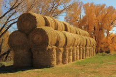 Round Hay bales in Autumn. A stack of round hay bales against a golden Autumn backdrop Stock Photos