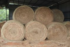 Round Hay Bales In The Barn. Round Hay Bales used to feed cattle in the winter when the grass is gone. Now stored in the Hay Barn royalty free stock photos