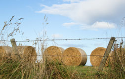 Round Hay Bales Royalty Free Stock Photography