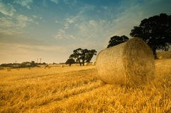 Round hay bales in field. A view of round hay bales in a large, open field Royalty Free Stock Image