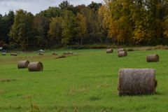 Round Hay Bales in the Field Stock Image