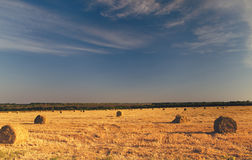 Round hay bales in a field at dusk Royalty Free Stock Photo