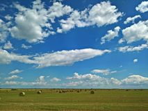 Round hay bales on the field Royalty Free Stock Images