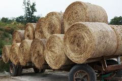 Round hay bales on a flat bed trailer Royalty Free Stock Images