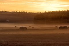 Round hay bales on a foggy field Royalty Free Stock Photo