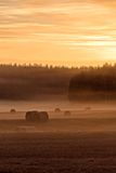 Round hay bales on a foggy field Stock Photography