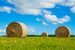 Round hay bales in a green field Royalty Free Stock Photos